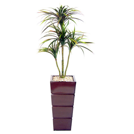 4 Head Yucca Plant