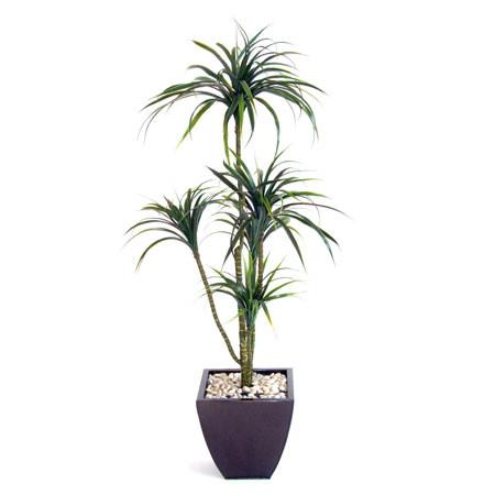 5 Head Yucca Plant