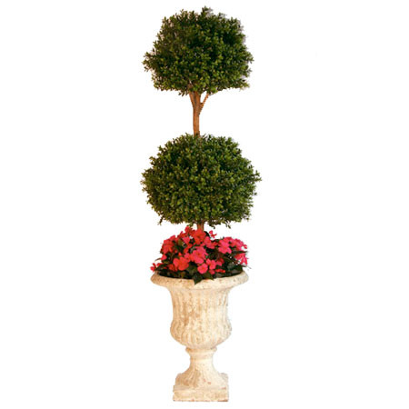 120cm Boxwood Ball Tree