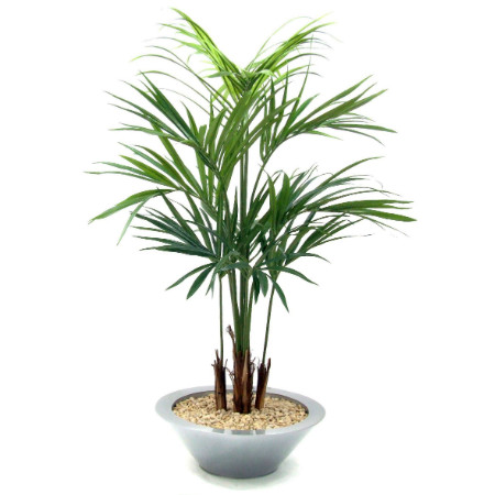 Kentia Palm in round tin bowl web image
