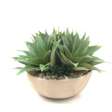 Agave garden in round bowl