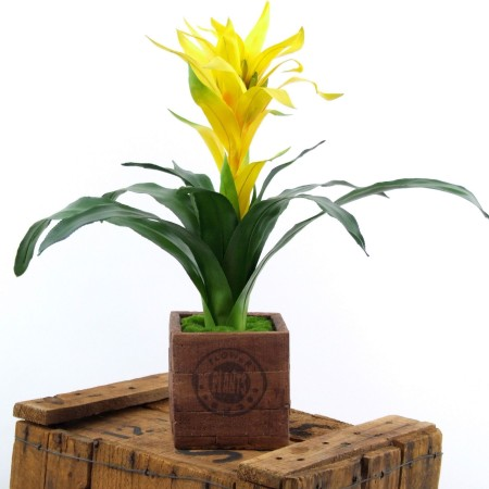 Bromeliade yellow