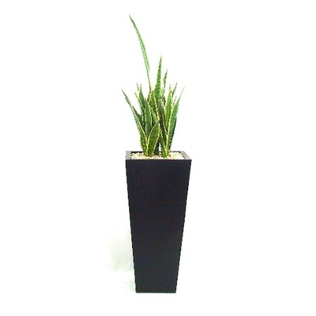 Mother in Law tongue in black planter web image
