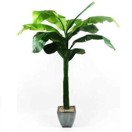 Banana Palm 2 web image