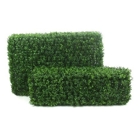 Boxwood Hedges web image 2