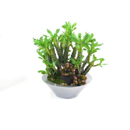 Cactus garden web image