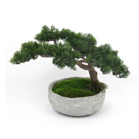 Large bonsai in stone pot web
