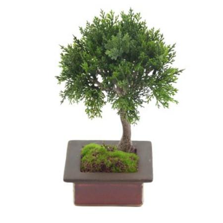 single bonsai web