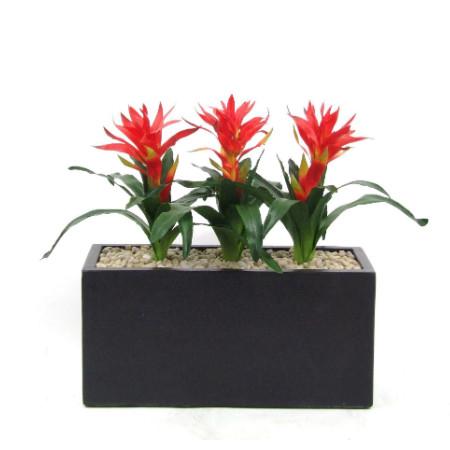 Bromeliads in trough planter web