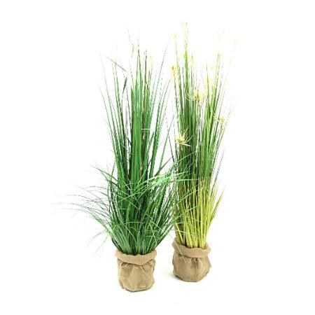 pampass grass and sunny grass web