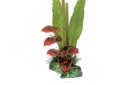 Antherium arrangement