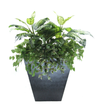 diffenbacia and caladium planter 2