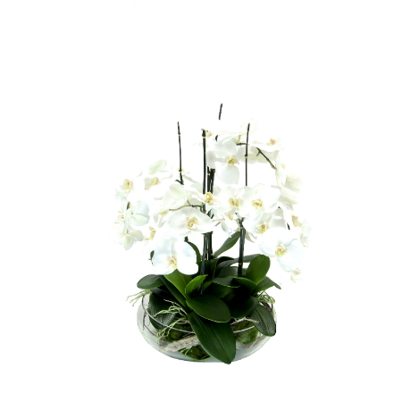 orchids in floating bowl copy