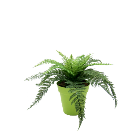 fern-in-lime-pot-web