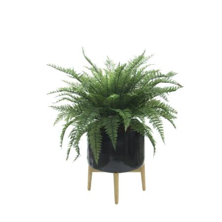 ruffle-fern-in-oaisis-planter