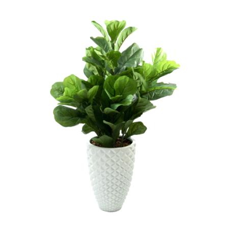 fiddle-leaf-bush-in-facet-pot