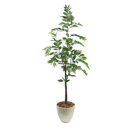 Neme tree