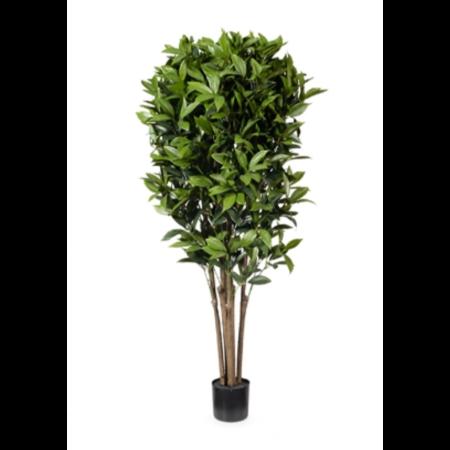 Shikibi Leaf Tree 1 2 High
