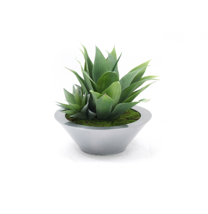 Agave garden in round bowl web image