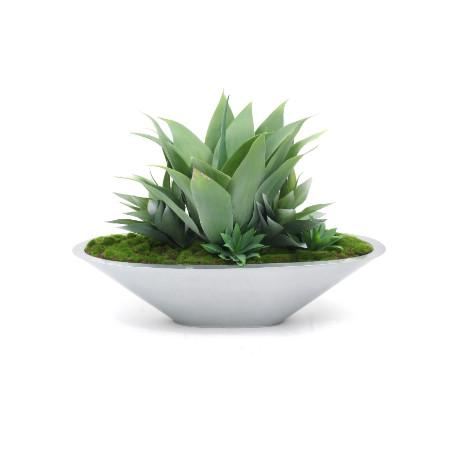 Agave garden in silver planter web image