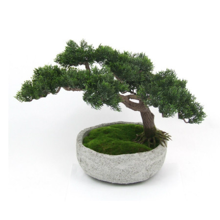 Large bonsai in stone pot web