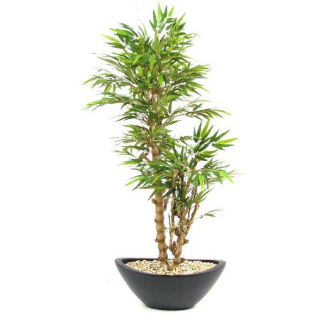 Budda Bamboo web