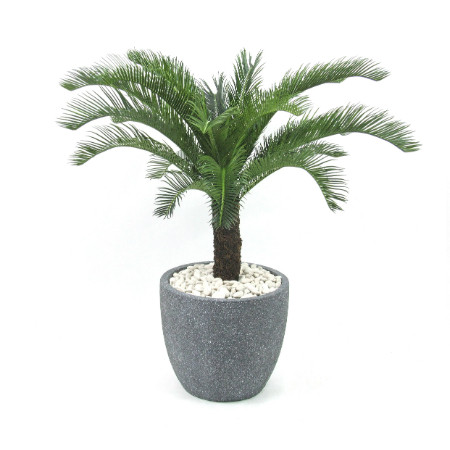 Cycad in mason planter web