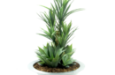 Yucca and agaves in round planter