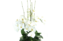floating magnolia arrangement