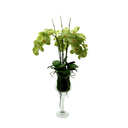 green-orchids-in-tall-vase