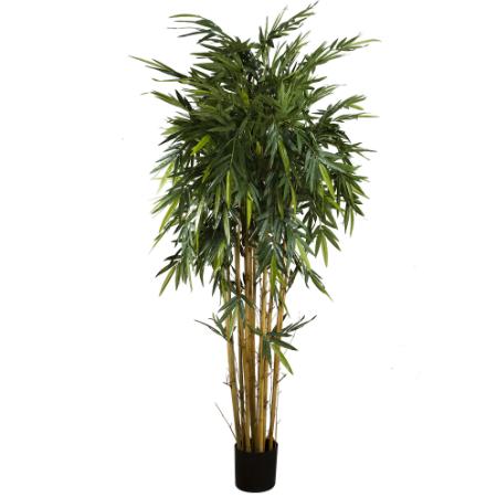 24 Bamboo