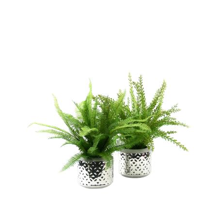 Sun friendly plants
