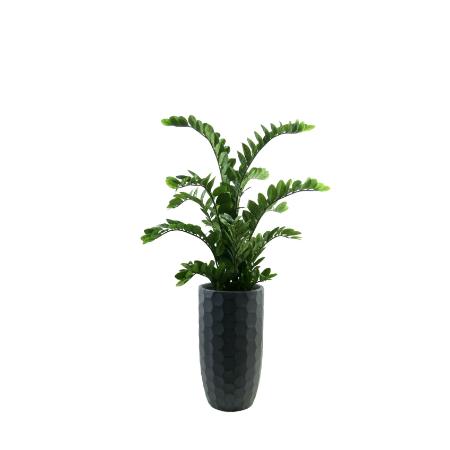 Zanzibar in planter