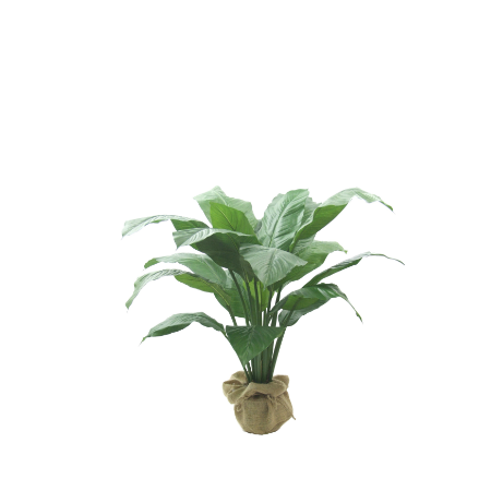 Peace lily. 450 x 450png