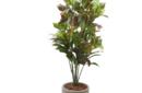croton tree in Nars light web image