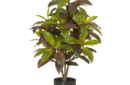 Croton bush
