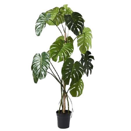 monstera tree (1)